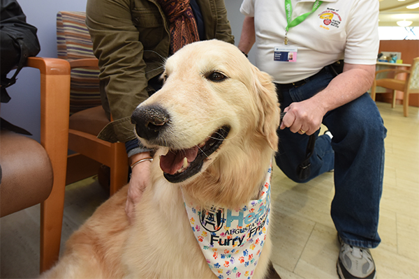 Gracie, a therapy dog, regularly visits the Georgia Cancer Center.
