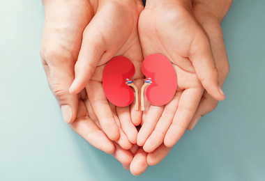 Parent holding child hands with kidneys